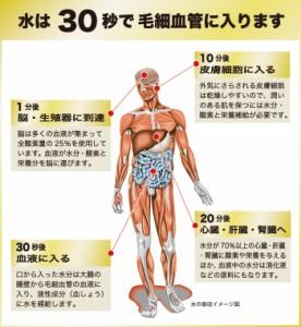 高濃度 酸素リキッドWOX<ウォックス>(300mL(1ケース24本入)【メディサイエンス・エスポア】【送料無料】【酸素水】【疲労回復 サプリ
