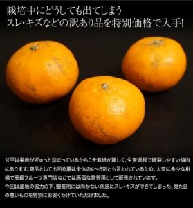 《送料無料》愛媛県産 スレ・傷有・サイズ不揃い 「訳あり甘平」 約2kg ※常温 ★