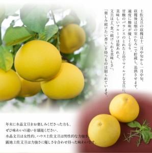 《送料無料》『土佐文旦』 高知県産 3L以上 (5〜10玉) 約4kg ※常温〇