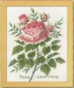【予約/4月下旬】 Olympusクロスステッチ刺繍キット 7504 「ローザセンティフォーリア」  Rosacentifolia