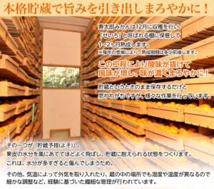《送料無料》静岡県産「寿太郎みかん」 超小玉2S 約2.5kg ※常温 ☆