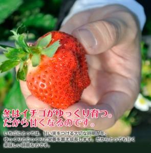 福岡県産 あまおういちご G(グランデ) 約270g×2パック ○