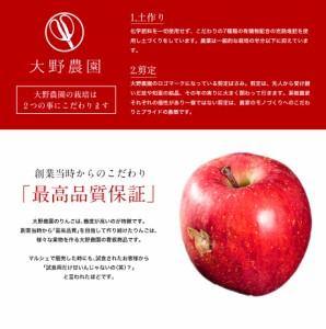 《送料無料》大野農園の雹(ひょう)害サンふじリンゴ L〜4Lサイズ 約5kg(わけわけ袋 2枚入り) 福島県石川町産 ※常温☆