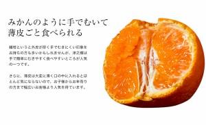 《送料無料》佐賀産 「津之輝(つのかがやき)」 2S〜2L 約2.5キロ(11〜30玉) ※常温 ○