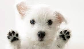 ネックレス アメジスト 2月 誕生石 犬 肉球 プチサイズ ペンダント  レディース いぬ シルバー ギフト プレゼント