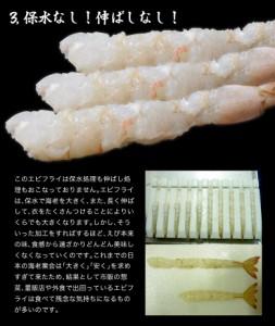 ≪送料無料≫築地市場 卸の社食 天然エビフライ Lサイズ 10尾 250g×3P ※冷凍 ☆