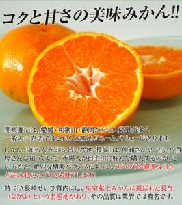 《送料無料》長崎県産 大玉みかん 2〜3L 約2kg ※常温  ☆