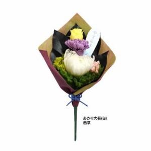 プリザーブドフラワー(仏花) あかり 大菊(白) 若草 C21080