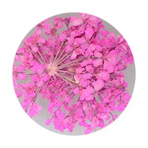 Pieadra レースドライフラワー ピンク 【ネイルアートアクセサリー・ネイルパーツ関連ネイル用品】
