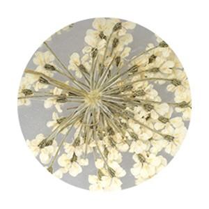 Pieadra レースドライフラワー ホワイト 【ネイルアートアクセサリー・ネイルパーツ関連ネイル用品】