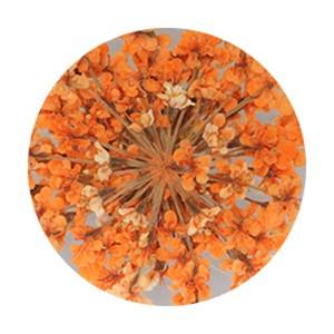 Pieadra レースドライフラワー オレンジ 【ネイルアートアクセサリー・ネイルパーツ関連ネイル用品】