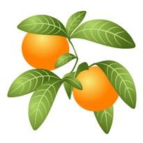 【メール便可】オレンジビター 10ml 【アロマオイル/精油/エッセンシャルオイル】