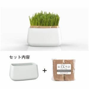 HARIO 猫草栽培キット にゃんベジセット