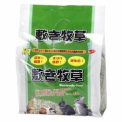 敷き牧草 バミューダグラス(約1kg)(発送可能時期:通常3-5日で発送予定)[小動物の牧草・敷材]