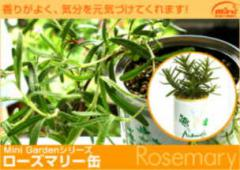 香りが良く、殺菌・強壮などの作用を持つ ハーブ缶「ローズマリー」