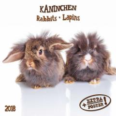 SALE 2018 年 カレンダー Rabbits うさぎ artwork STUDIOS  インテリア2018 Calendar平成 30年 暦 通販