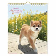 カレンダー 2019年 DOG マンスリー 壁掛け スケジュール いぬ インテリア平成31年 暦 通販  予約