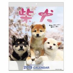 カレンダー 2019年 森田米雄 まるごと柴犬 壁掛け スケジュール いぬ インテリア平成31年 暦  予約 cp100