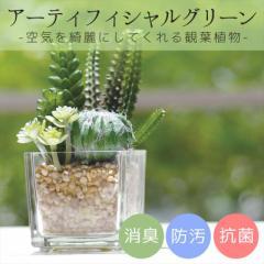 【取寄品】 サキュレントリフレリウム CT触媒加工インテリア造花 消臭アーティフィシャルグリーン KH-60985  インテリアギフト通