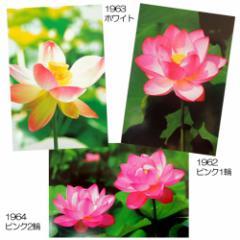 ロータス 蓮花 フラワーポストカード フォトカード通販 シネマコレクション メール便可