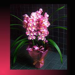 【結婚記念日 お祝い 78】父の日 ギフト おまかせ 旬のお祝い用 洋蘭 花ギフト結婚記念日祝い、誕生日