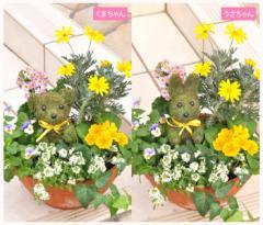 【寄せ植え】お花畑みたい♪トピアリーの寄せ植え☆ お祝い お花 鉢植え ギフト 誕生日 プレゼント 母 祖母 女性 新築祝い