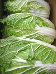 国産 はくさい 白菜 1箱12kg