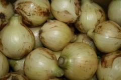 愛知県産 めぐみ農場 自然栽培 新たまねぎ(5kg)