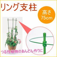 リング支柱 75cm 1個入 園芸 ガーデニング 家庭菜園 観葉植物 支柱 土 野菜 栽培 簡単 便利 鉢 竹
