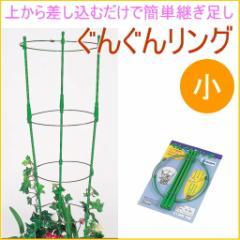 ぐんぐんリング 小 2セット入り 園芸 ガーデニング 家庭菜園 観葉植物 支柱 土 野菜 栽培 簡単 便利 鉢 竹