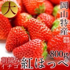イチゴ 800g 400g×2P 岡山産 2L-3L 紅ほっぺ かおり野 岡山産 生産者直送 苺フルーツギフト