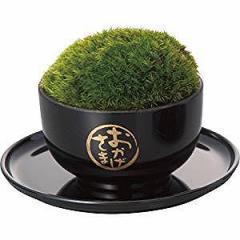 ミニ盆栽 苔玉 黒  【送料無料】(ガーデニング、盆栽、フラワーアレンジメント)