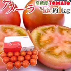 """静岡県 """"高糖度フルーツトマト アメーラ"""" 約1kg 大きさおまかせ ほんのちょっと訳あり 化粧箱入り"""
