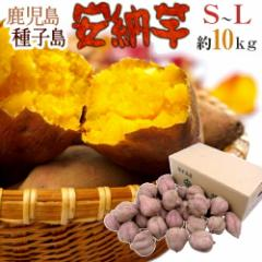 """【送料無料】種子島産 """"安納芋"""" S〜Lサイズ 約10kg【予約 10月中下旬以降】"""