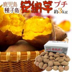 "【送料無料】種子島産 ""安納芋"" プチサイズ 約3kg【予約 10月中下旬以降】"