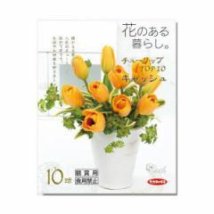 (観葉)チューリップ球根 花のある暮らし。TOP10シリーズ キャッシュ 10球詰(1袋)