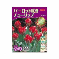 (観葉)JFBYコレクション チューリップ球根 ロココ(2003年受賞品種) 5球詰(1袋)