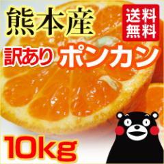 【 送料無料 】  熊本産  訳あり ポンカン  10kg   【 九州 熊本 みかん 柑橘 オレンジ 】