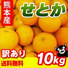 【 送料無料 】  2月中旬より発送開始! 熊本産  訳あり せとか  10kg   【 九州 熊本 みかん セトカ 柑橘 オレンジ 】