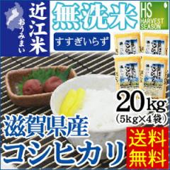 【送料無料】28年産 無洗米滋賀県産コシヒカリ20kg(5kg×4袋)【お米/BLコシヒカリ/ハーベストシーズン】