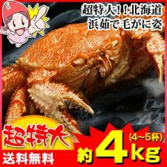 超特大!!北海道浜茹で毛がに姿【約4kg】(4〜5杯)【送料無料】