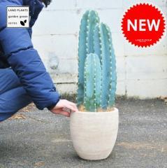 柱サボテン デザインの良いテラコッタ鉢の鉢植え サボテン セレウス 鉢セットお買い得