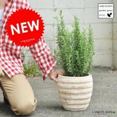 【ガーデングリーン】【ハーブ】 ローズマリーアンティークブラウン鉢の 鉢植えローズマリーGarden green series 虫除け 虫よけの木