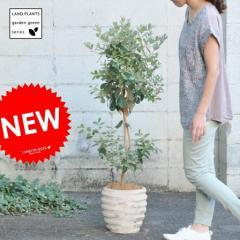 【 ガーデンツリー 】【果樹】H120cm フェイジョア アンティークブラウン鉢に植えた アナナスガヤバ Garden green series トライア
