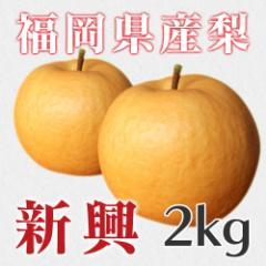 秋月の梨 新興 約2kg