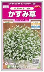 サカタのタネ かすみ草 ジプシーホワイト 約60粒 【郵送対応】