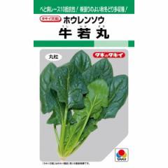 タキイ種苗 ほうれん草 牛若丸 30ml【郵送対応】