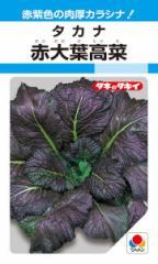 タキイ交配 タカナ 赤大葉高菜 8ml 【郵送対応】