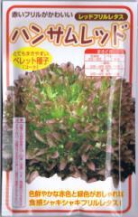 横浜植木 レタス・ハンサムレッド Lコート種子 約100粒 【郵送対応】