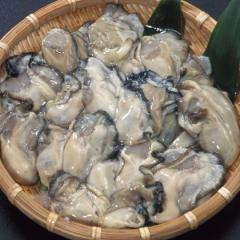【送料無料】殻付!能登中島名産牡蠣 1斗缶(たっぷり約80〜100個) 【牡蠣鍋 カキフライ 他 いろいろ】牡蠣ナイフ付き!